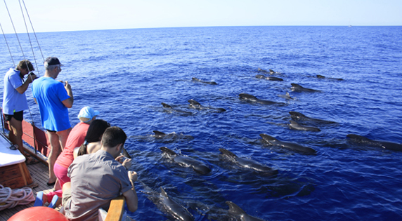 Dolphin and whale watching in Mazarrón