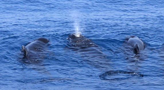 Delfines y Ballenas en la Costa Cálida
