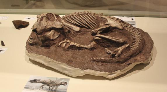 Paleontological Museum of Elche.