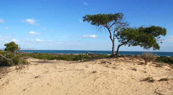 5 Increíbles playas en Guardamar. ¡Visítalas!