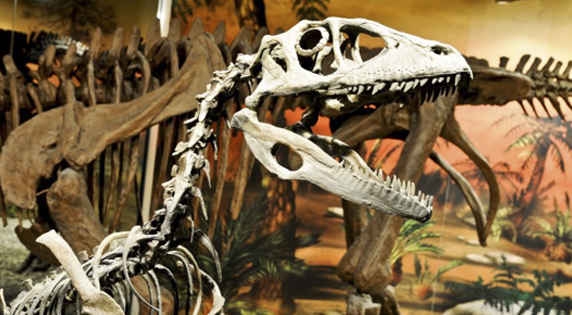 Paleontological Museum of Elche